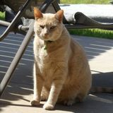 Looking for Well Trained Pet Trainer in Stillwater to feed my cat daily and spend a liitle time with him.