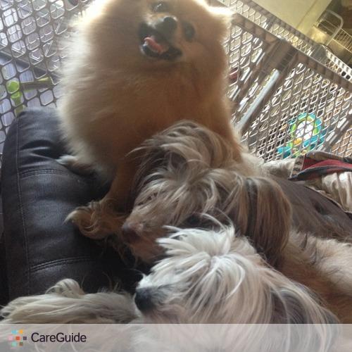 Pet Care Provider Anna Kosteva's Profile Picture