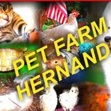PET FARM is offering Pet Sitting and Pet Boarding for domestic and farm animals.
