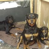 Owner of 3 beautiful dogs willing to take care of any animals you may have