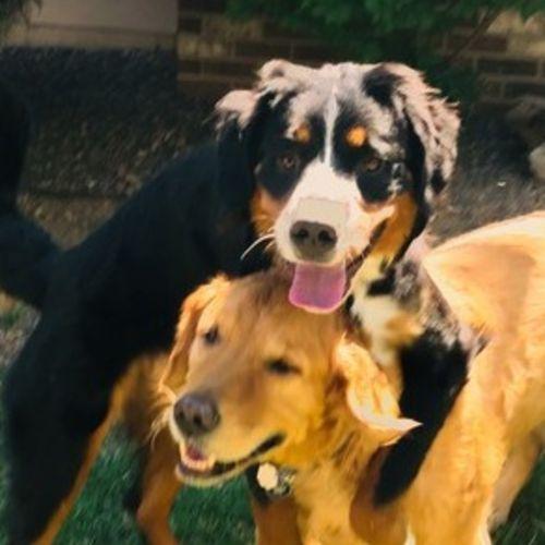 Pet Care Provider Kat S's Profile Picture