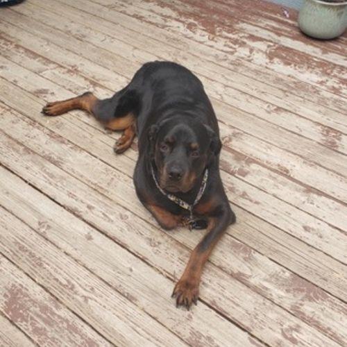 Pet Care Provider Faith S's Profile Picture