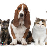 Dog Walker, Pet Sitter in Janesville