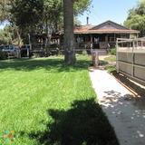 Dog Walker, Pet Sitter in Sunland