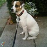 Dog Walker, Pet Sitter in Tillsonburg