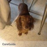 Dog Walker, Pet Sitter in Minnetonka