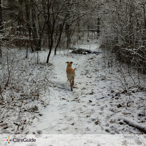 Pet Care Provider Laura McCoy's Profile Picture