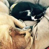 Pet Care Job in Urbana