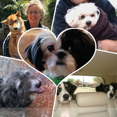 House Sitter Provider Denise C's Profile Picture