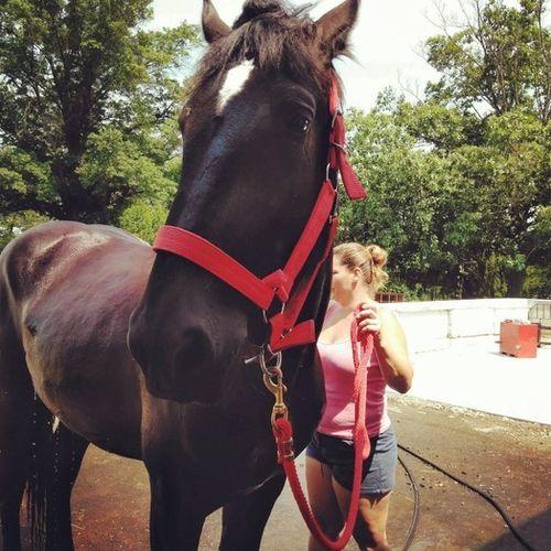 Pet Care Provider Stephanie P's Profile Picture