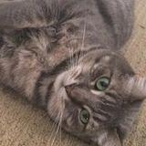 Passionate Loving Camarillo Pet Sitter