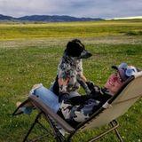 Most Consistent Dog Walker in Bozeman