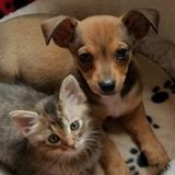 Dog and Cat sitters!