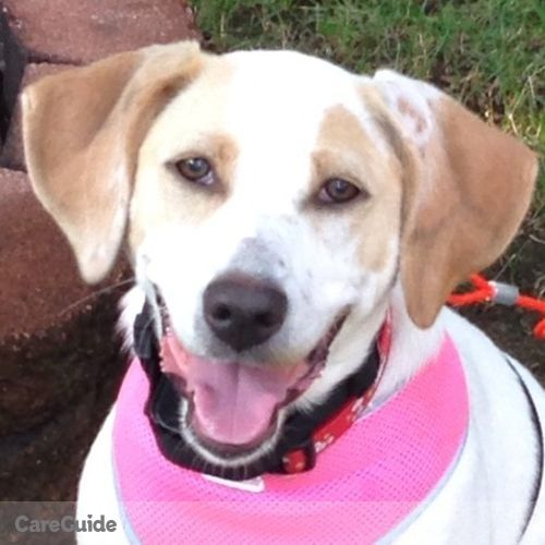 Pet Care Provider Alyssa L's Profile Picture