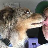 Seeking a Dog Sitter Job in Fredericksburg