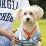 Dog Walker Job, Pet Sitter Job in Marietta