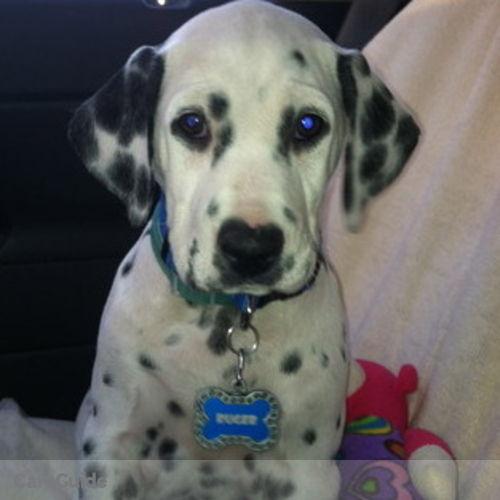 Pet Care Job Jill Henningfeld's Profile Picture