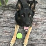 Dog Walker Job in Interlachen