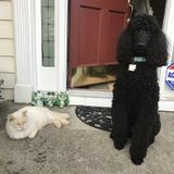 Dog Walker, Pet Sitter in Duluth