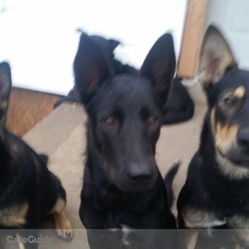 Pet Care Provider Teri Adams's Profile Picture