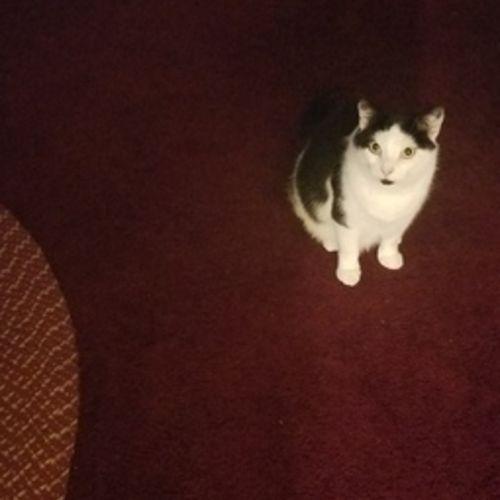 Pet Care Provider Rhonda D's Profile Picture