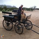 Pet Sitter in Scottsdale