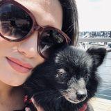 Qualified Pet Sitter/Dog Walker in Sherman Oaks, California