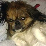 Experienced, responsible pet sitter/walker