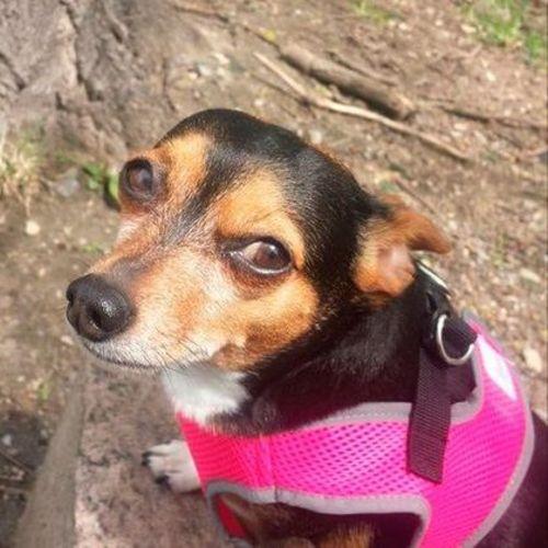 Pet Care Provider Brooke Fecteau Gallery Image 2