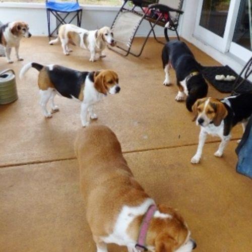 Pet Care Provider Lori C Gallery Image 3