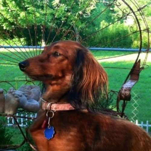Pet Care Provider Susan H's Profile Picture