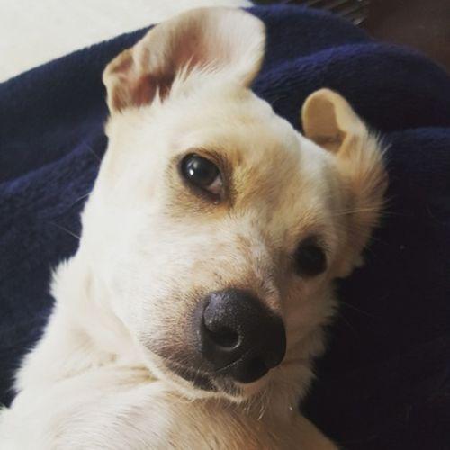 Pet Care Provider Sophia Reimer Gallery Image 2