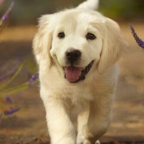 Trustworthy Dog Sitter Available Immediately