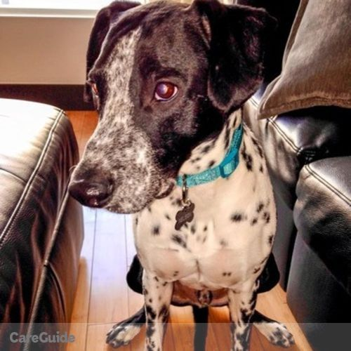 Pet Care Job Lauren E's Profile Picture