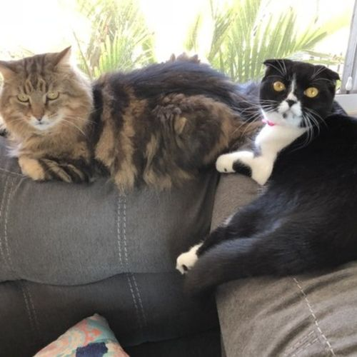 Pet Care Provider Rochele L Gallery Image 1