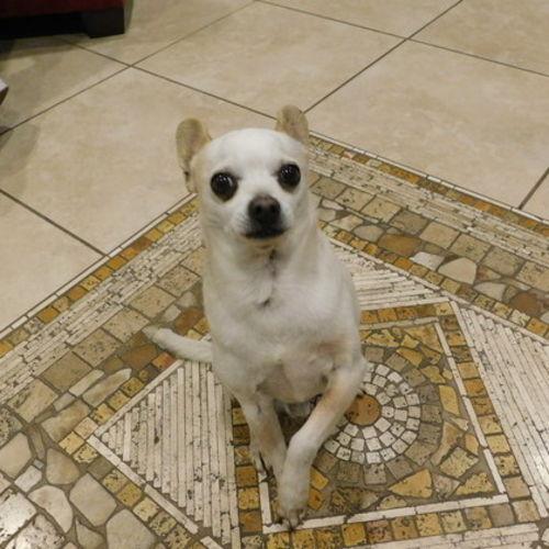 Pet Care Provider Alondra L Gallery Image 1