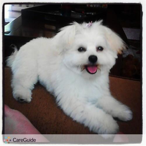 Pet Care Provider Jordan Bryant's Profile Picture