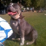 Dog Walker, Pet Sitter in Ashcroft