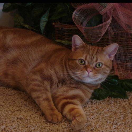 Pet Care Job Phil Y's Profile Picture