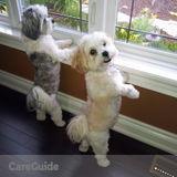 Dog Walker, Pet Sitter in Fenwick