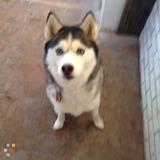 Dog Walker, Pet Sitter in Cleveland