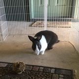 Needed pet sitter in Pensacola, PSC area for 1 Dutch rabbit with arthritis.