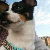 For Hire: Careful Pet Care Provider in San Antonio