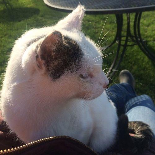 Pet Care Provider Kirbi Rogers Gallery Image 3