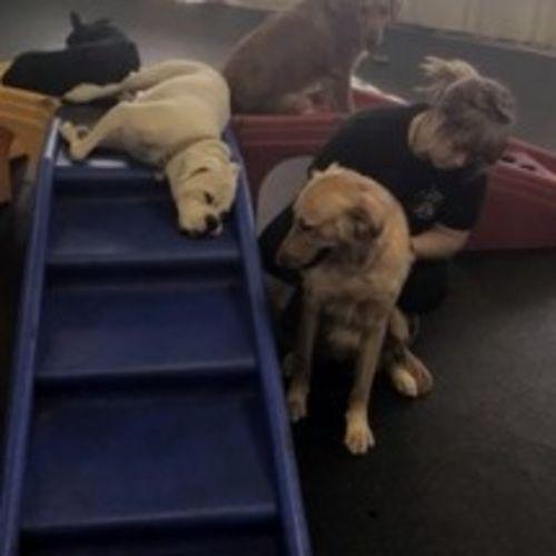 Pet Care Provider Giavonna P's Profile Picture
