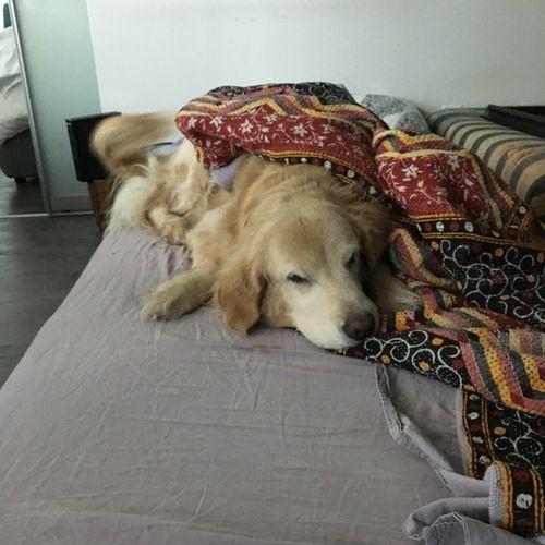 Pet Care Provider Sophia J Gallery Image 1
