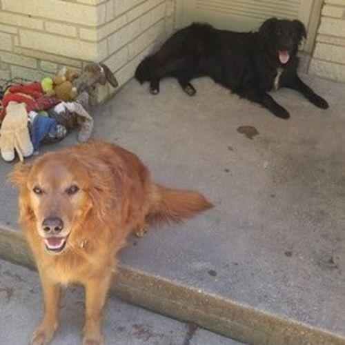Pet Care Provider Alisha Spruit Gallery Image 3