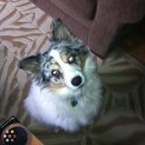 Dog Walker, Pet Sitter in Angus