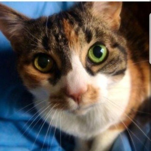 Pet Care Provider Madison P Gallery Image 3