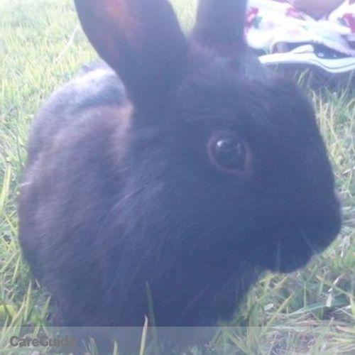 Pet Care Provider Cynthia M's Profile Picture